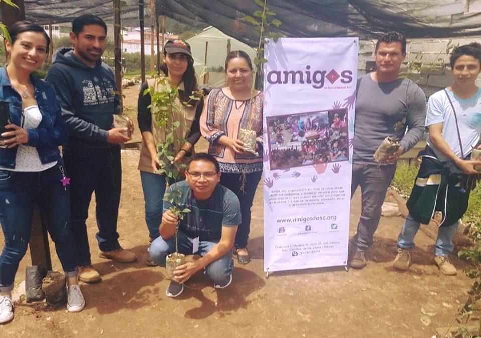 Entrega de árboles al equipo Búhos de San Cristóbal de Las Casas
